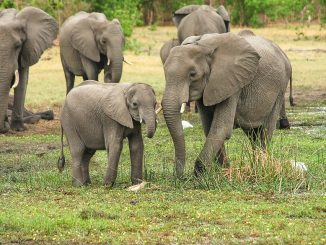 Séjour en Afrique, combiner les destinations les plus populaires