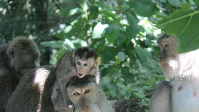 Idées de voyage en famille : 2 activités incontournables à Bali